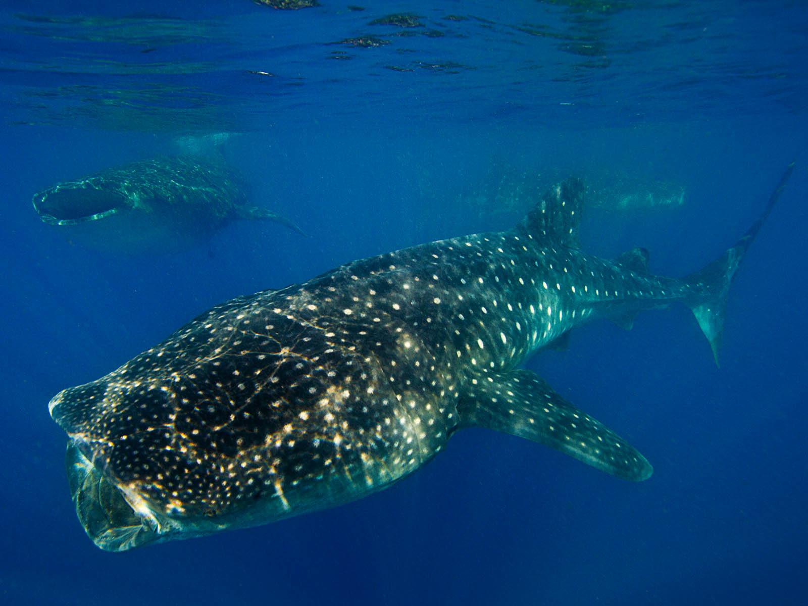 798-7754-4175-set-mb-oris-aquis-gmt-date-whale-shark-limited-edition-2.jpg