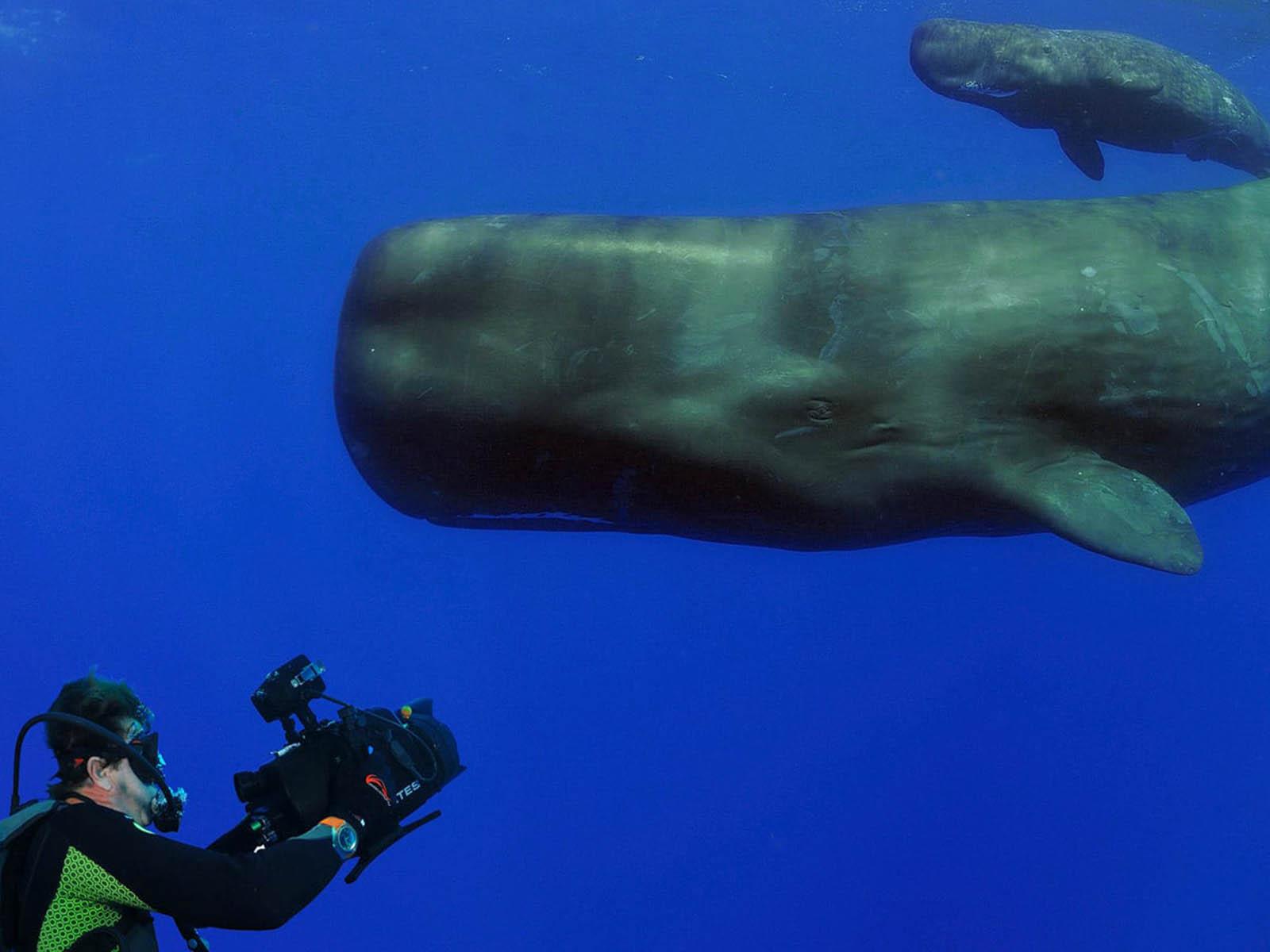 omega-good-planet-planet-ocean-3.jpg